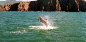 Warnings issued about dangerous Aran Islands dolphin Dusty