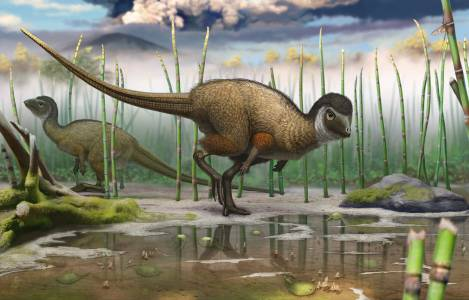 An artist's impression of one of our feathered dinosaur friends