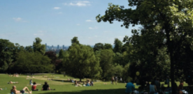 Camden park warden hospitalised after robbers cause head injury