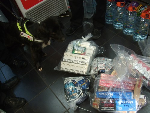 Thousands of illegal cigarettes seized after dog raids
