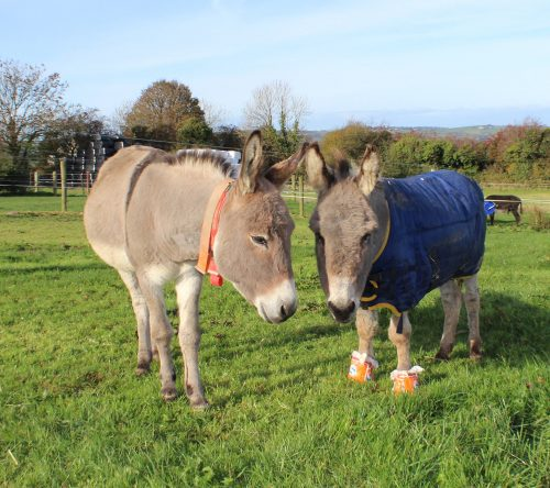 Donkey sanctuary oreo saved