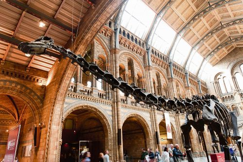 Dippy paves way Wexford blue whale