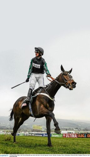 Rising cheltenham big star Altior