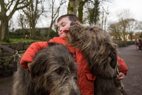 Irish Wolfhounds Welcome Return Bunratty Castle